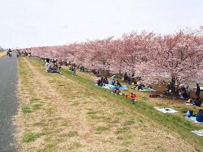 埼玉 防音賃貸モーツァルトパーク戸田公園は桜が見どころの河川敷があります