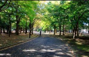 渋谷区 防音室 代々木上原 代々木八幡 代々木公園 防音室 マンション 近所の公園
