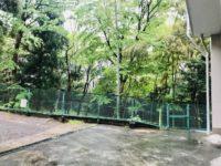 建物の周りの竹林