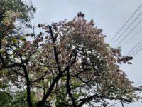 周囲の花木