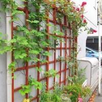 野方カンタービレ 壁面緑化