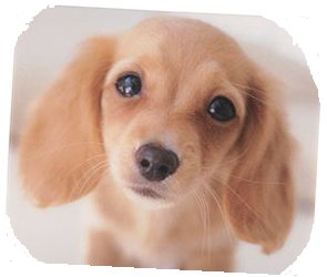 防音マンション 犬