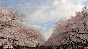 東京芸大 上野学園 に近い JR 山手線 京浜東北線 銀座線の 上野 音楽マンション の近くの上野公園